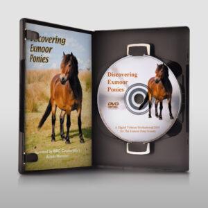 Discovering Exmoor Ponies