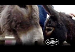 We care for thousands of donkeys
